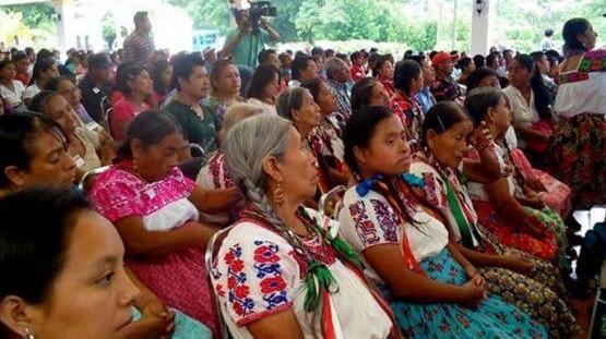 consulta indigena